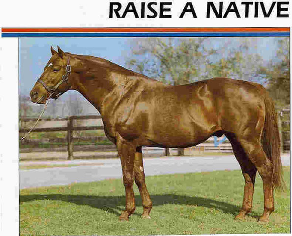 Name:  Horse_Raise_a_Native-_2big.jpg