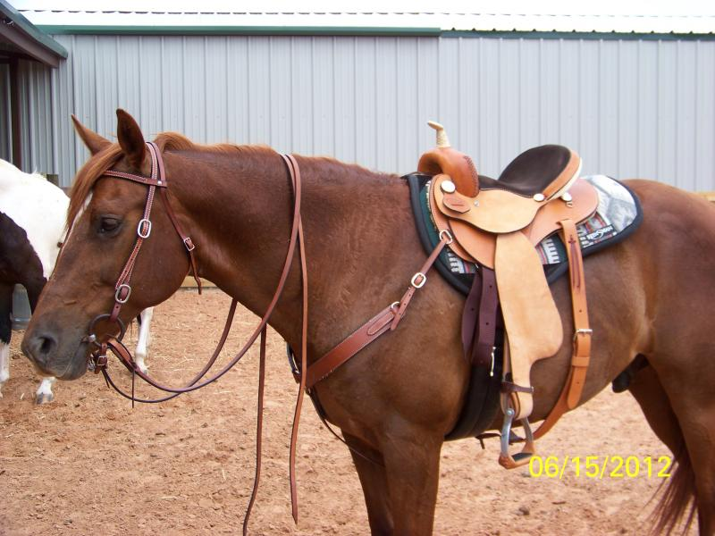 Name:  Saddles 003.jpg