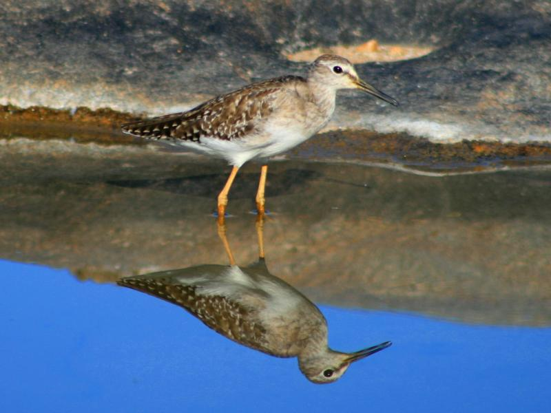 Name:  Sandpiper (7)a.jpg