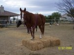 Horses on the Bales 156.jpg