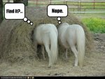 funny-pictures-horses-look-for-needle-in-haystack.jpg
