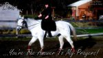 22793d1263967173-feel-free-use-my-horse-i-picture-540.jpg