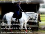22797d1263967390-feel-free-use-my-horse-i-picture-577.jpg