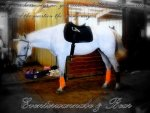 22802d1263967735-feel-free-use-my-horse-i-picture-097.jpg