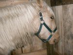 Honey'smane 027.jpg