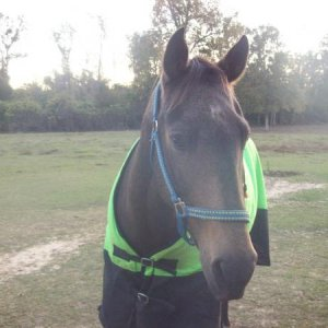 duke styling in his lime green blanker!