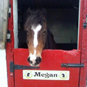 Megan looking out her stable