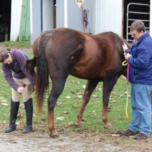 me and dad cleaning Zip's hooves before first show