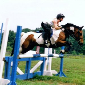 my old eventer pony