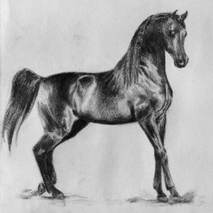 A drawing of Pyro Thyme SA, one of my favorite Arabian stallions.  :)