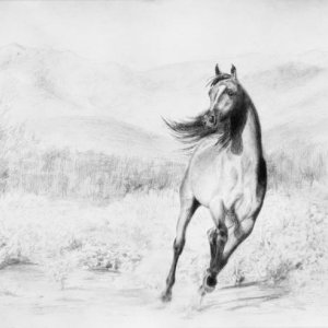 Part of my series of three Arabian stallions.