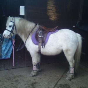 All tacked up, he's looking a bit fattt.