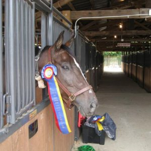 Hoshi with one of his champion ribbons