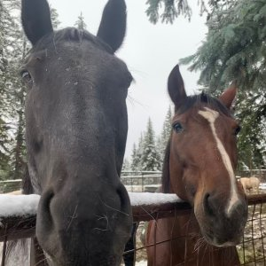 My Blue roan Indigo with his friend!