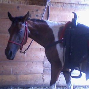 This is my pony Baylee,I've had her a very long time and we are best friends <3