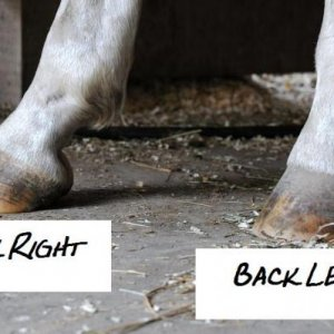 back hooves
