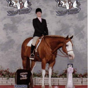 Pinto world, reserve championship in english discipline rail