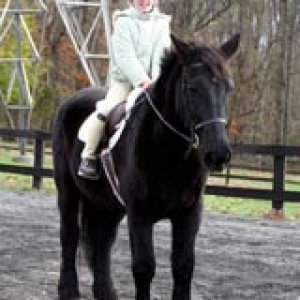 Moses.. <333 School horse we bought that winter. Ridden him.. four times and he is amazing!