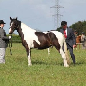 Inhand Showing Layla, Qualified for royal london who then went on with her new owners to be placed :)