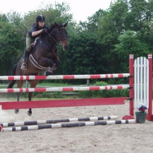 Jumping a friends OTTB gelding; Dustin over his first 4ft fence