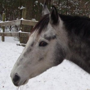Jakers pony in the snow