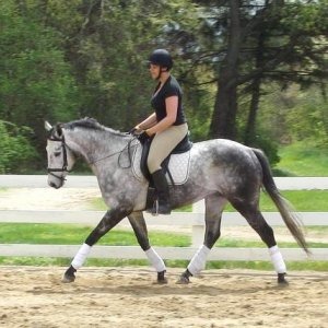 My grey TB Jake and I ring work at the trot