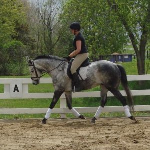 Jake and I trot