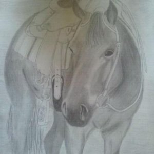 horse pencil drawing a gift to my trainer