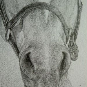 Close-up view of nose, pencil