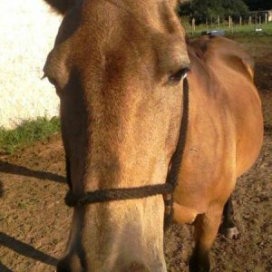 This is Smokey she was a wounderful horse she is the one that got my girlfriend unafraid of horses R.I.P Smokey we still love you
