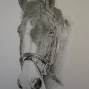 'Rufus' commission completed, graphite on 8x10""