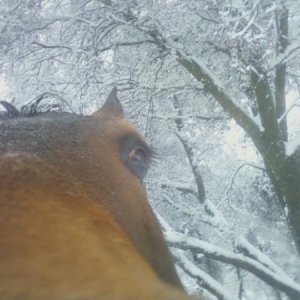 The snowy nose shot!  (;  Because we had to have at least one! - March 2012