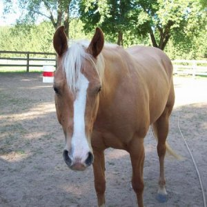 My old Quarter Horse Cody