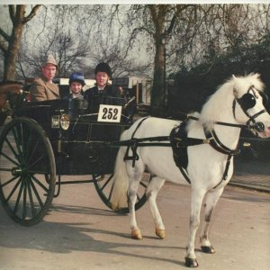 tricky at battersea park london harness horse parade to a governess cart cir made in 1904