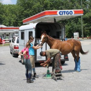 Getting a shoe on in the Citgo parking lot.  I'm an so lucky to have such a great horse and a great farrier.