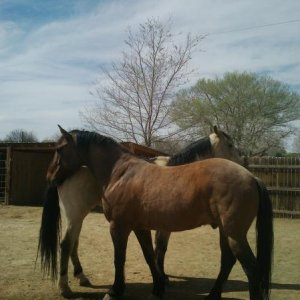Wrangler and Kolt saying hello