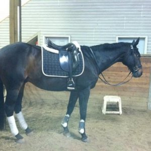 he hates dressage but it does wonders for that caboose!