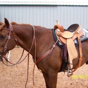 Rascal is showing off his new Rider's Choice barrel saddle.