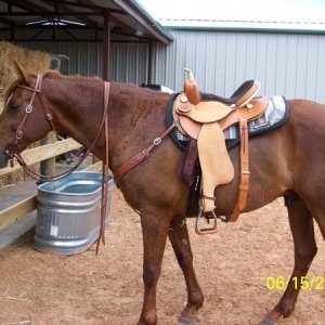 And Rascal is sporting his new Rider's Choice barrel saddle along with his Amish made bridle and breast collar.