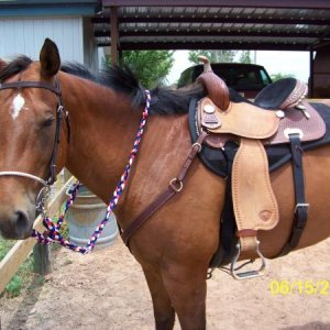 Moon is showing off her new Tex Tan barrel saddle. :)