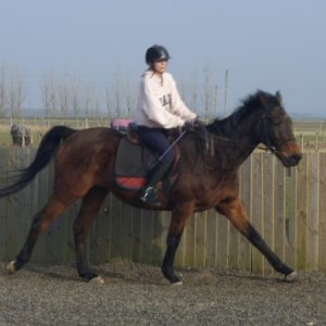 arnie in medium canter going large.