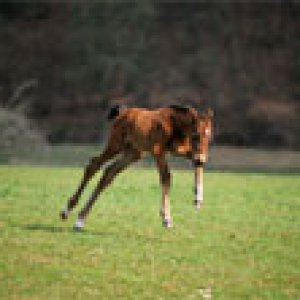 this is another really succeful foals