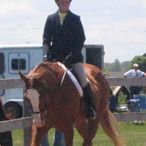 Too Tuff Tardy aka Sox He's my daughters retired show horse that taught me how to ride.  He's 28 now.  This photo was from 4 years ago.