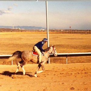 Galloping at Pikes Peak Meadows race track. These were racing arabians!! Funny little things