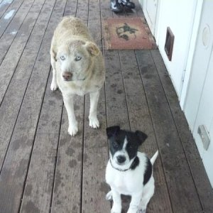 Star(cream) and Lacey(black and white)